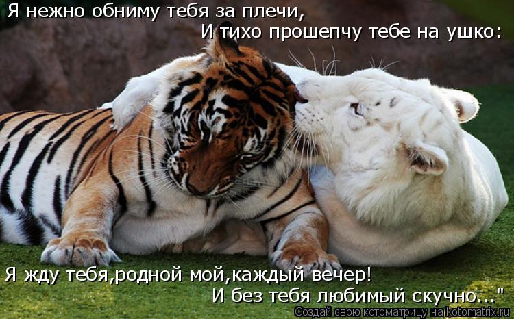 "Котоматрица: Я нежно обниму тебя за плечи, И тихо прошепчу тебе на ушко: Я жду тебя,родной мой,каждый вечер! И без тебя любимый скучно..."""