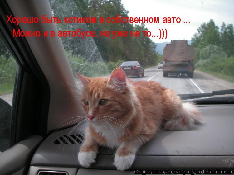 Котоматрица: Хорошо быть котиком в собственном авто ... Хорошо быть котиком в собственном авто ... Можно и в автобусе, но уже не то...)))