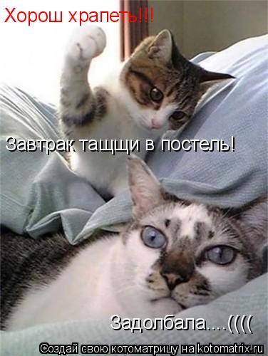 Котоматрица: Хорош храпеть!!! Завтрак тащщи в постель! Задолбала....((((