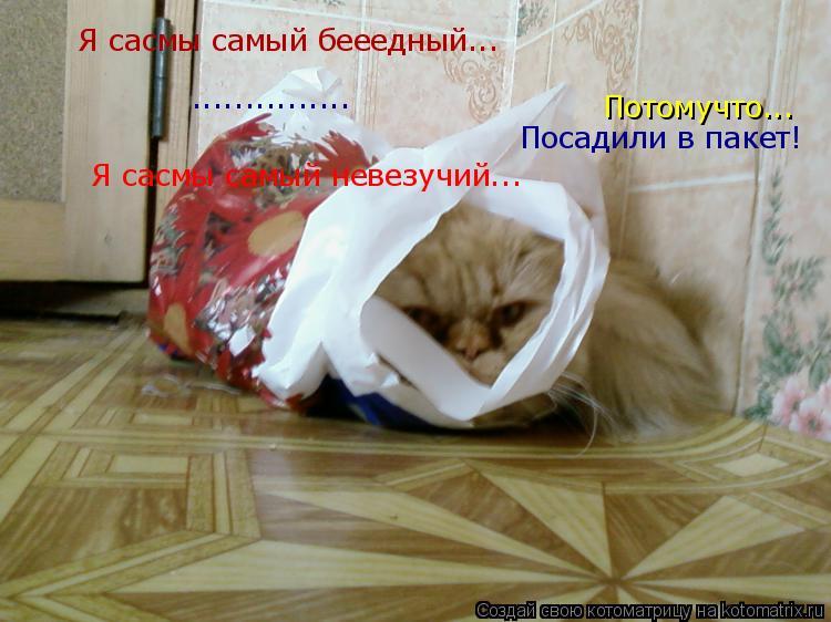 Котоматрица: Я сасмы самый бееедный... Я сасмы самый невезучий... Потомучто... ............... Посадили в пакет!