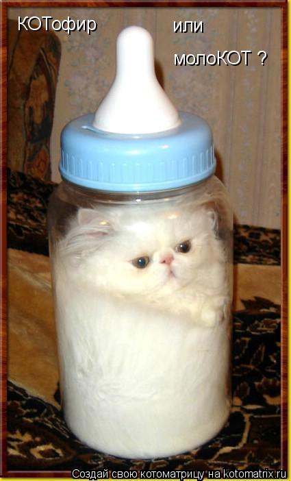 Котоматрица: КОТофир  или  молоКОТ ?