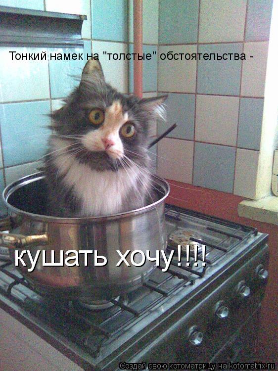 """Котоматрица: Тонкий намек на """"толстые"""" обстоятельства - кушать хочу!!!!"""