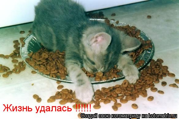 Котоматрица: Жизнь удалась !!!!!!