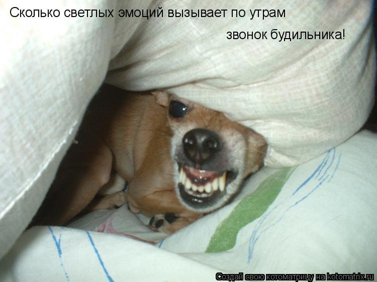 Котоматрица: Сколько светлых эмоций вызывает по утрам  звонок будильника!