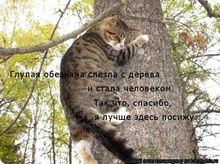 Котоматрица: Глупая обезьяна слезла с дерева и стала человеком. Так что, спасибо, я лучше здесь посижу...