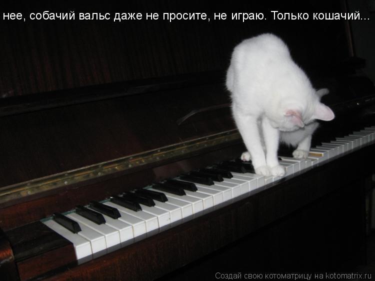 Котоматрица: нее, собачий вальс даже не просите, не играю. Только кошачий...