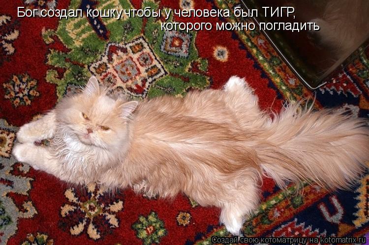 Котоматрица: Бог создал кошку,чтобы у человека был ТИГР, которого можно погладить
