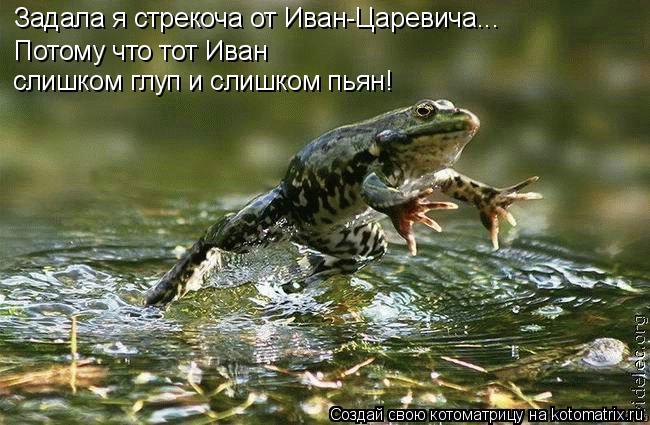 Котоматрица: Задала я стрекоча от Иван-Царевича... Потому что тот Иван  слишком глуп и слишком пьян!