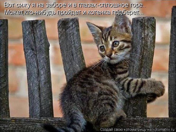 Котоматрица: Вот сижу я на заборе и в глазах-сплошное горе.. Может,кто-нибудь пройдет и котенка подберет...