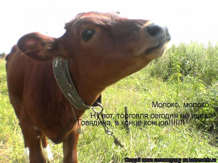 Котоматрица: Молоко, молоко... Ну вот, торговля сегодня не идет... Говядина, в конце концов!!!!!!!