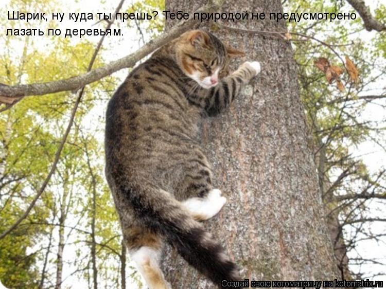 Котоматрица: Шарик, ну куда ты прешь? Тебе природой не предусмотрено лазать по деревьям.
