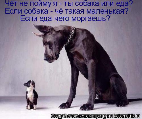 Котоматрица: Чёт не пойму я - ты собака или еда? Если собака - чё такая маленькая? Если еда-чего моргаешь?