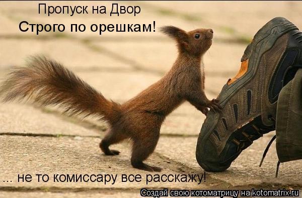Котоматрица: Пропуск на Двор Строго по орешкам! ... не то комиссару все расскажу!