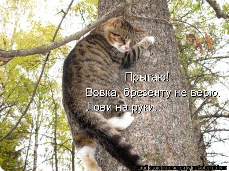 Котоматрица: Прыгаю! Вовка, брезенту не верю. Лови на руки...