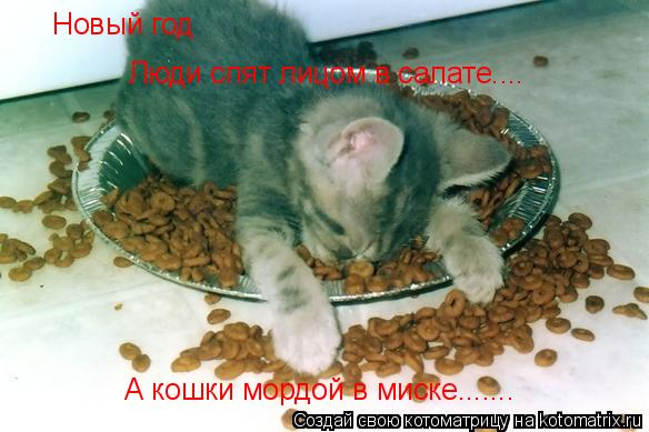 Котоматрица: Новый год Люди спят лицом в салате.... А кошки мордой в миске.......