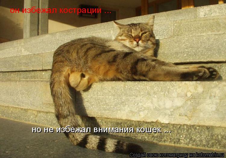 Котоматрица: он избежал кострации ... но не избежал внимания кошек ...