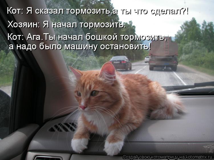 Котоматрица: Кот: Я сказал тормозить,а ты что сделал?! Хозяин: Я начал тормозить. Кот: Ага.Ты начал бошкой тормозить, а надо было машину остановить!