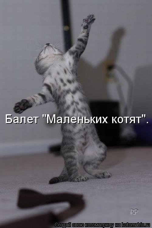 "Котоматрица: Балет ""Маленьких котят""."