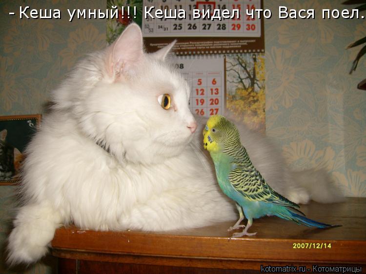 Котоматрица: Кеша умный!!! Кеша видел что Вася поел. -