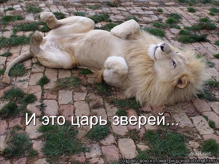 Котоматрица: И это царь зверей...