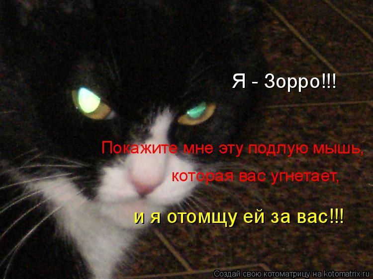 Котоматрица: Я - Зорро!!! Покажите мне эту подлую мышь, которая вас угнетает,  и я отомщу ей за вас!!!