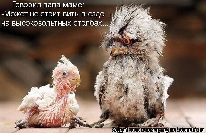 Котоматрица: Говорил папа маме: -Может не стоит вить гнездо  на высоковольтных столбах...