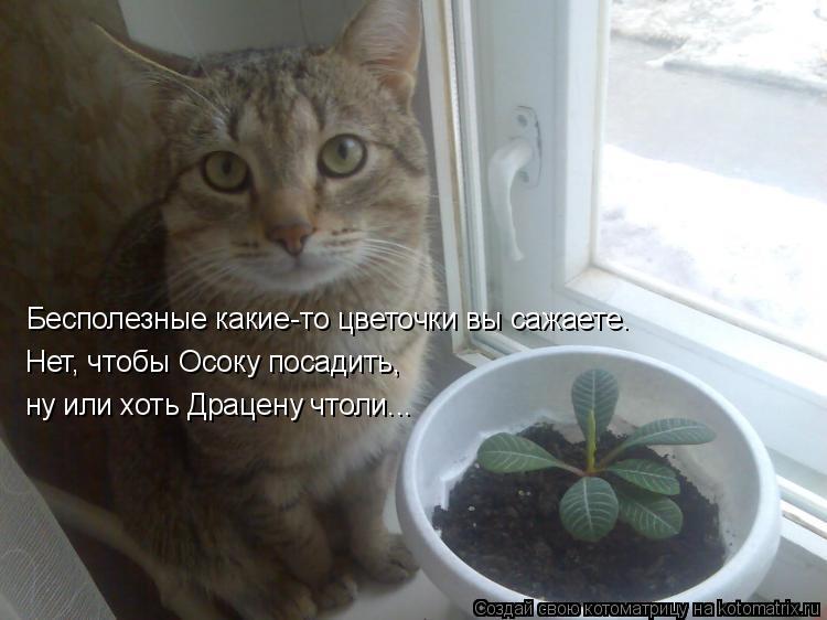 Котоматрица: Бесполезные какие-то цветочки вы сажаете. Нет, чтобы Осоку посадить, ну или хоть Драцену чтоли...