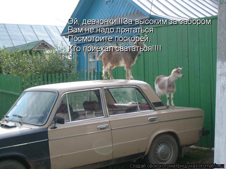 Котоматрица: Эй, девчонки!!!За высоким за забором Вам не надо прятаться Посмотрите поскорей, Кто приехал свататься!!!!