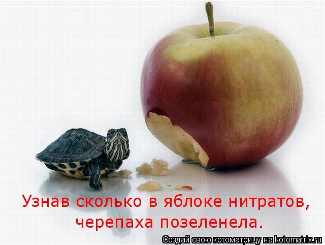 Котоматрица: Узнав сколько в яблоке нитратов,  черепаха позеленела.