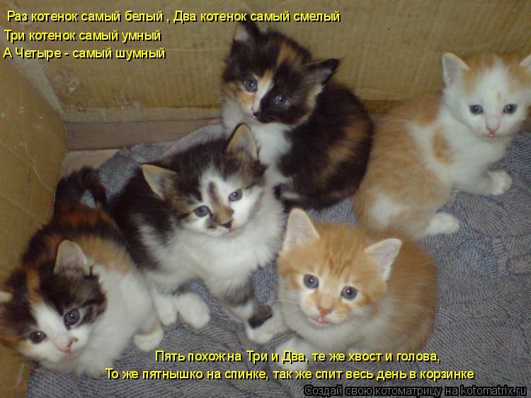 Котоматрица: Раз котенок самый белый , Два котенок самый смелый Три котенок самый умный А Четыре - самый шумный Пять похож на Три и Два, те же хвост и голов
