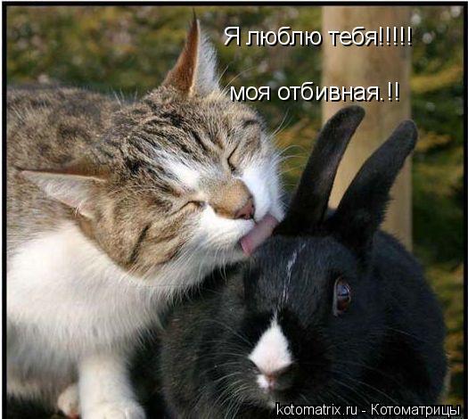 Котоматрица: Я люблю тебя!!!!! моя отбивная.!!