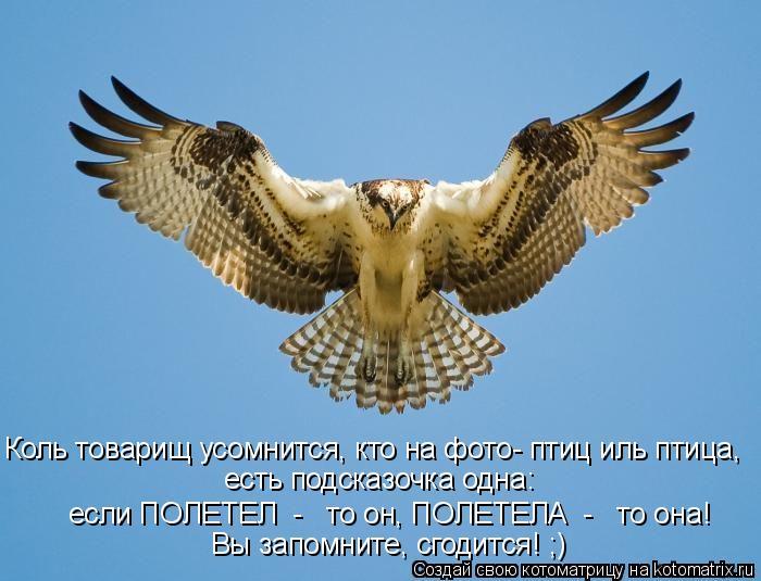 Котоматрица: Коль товарищ усомнится, кто на фото- птиц иль птица, есть подсказочка одна:  если ПОЛЕТЕЛ  -   то он, ПОЛЕТЕЛА  -   то она! Вы запомните, сгодится!