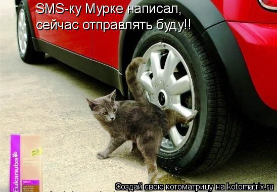 Котоматрица: SMS-ку Мурке написал, сейчас отправлять буду!!