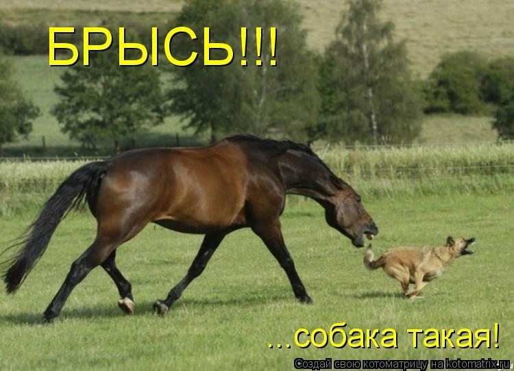 Котоматрица: БРЫСЬ!!! ...собака такая!
