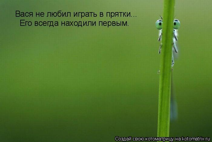 Котоматрица: Вася не любил играть в прятки... Его всегда находили первым.