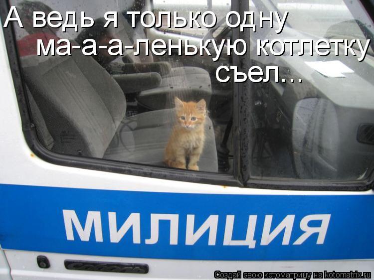 Котоматрица: А ведь я только одну ма-а-а-ленькую котлетку съел...