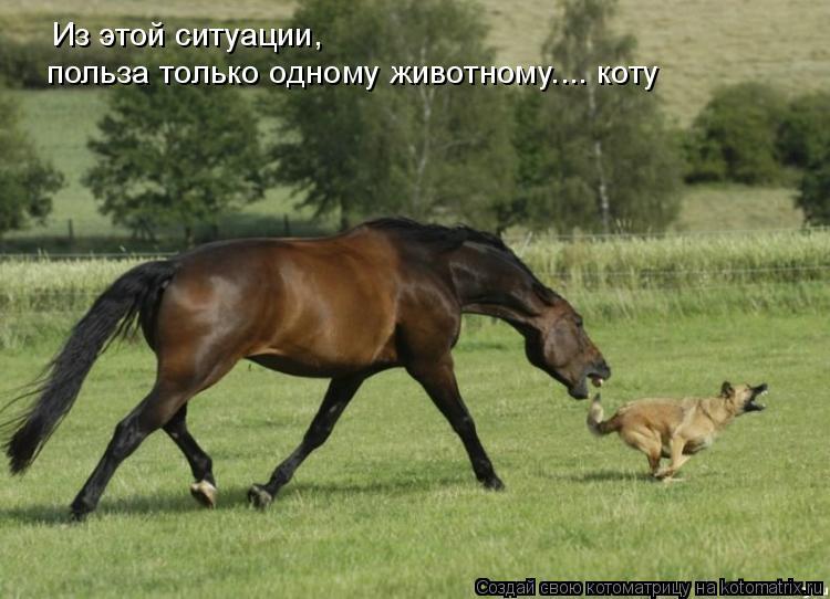 Котоматрица: Из этой ситуации,  польза только одному животному.... коту