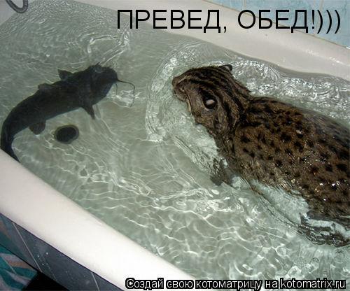 Котоматрица: ПРЕВЕД, ОБЕД!)))
