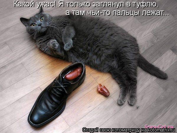 Котоматрица: Какой ужас! Я только заглянул в туфлю,  а там чьи-то пальцы лежат...