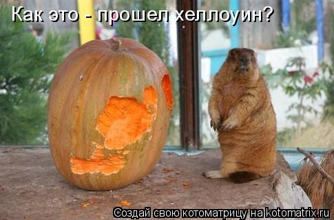 Котоматрица: Как это - прошел хеллоуин?