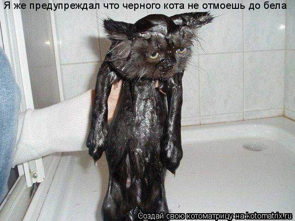 Котоматрица: Я же предупреждал что черного кота не отмоешь до бела