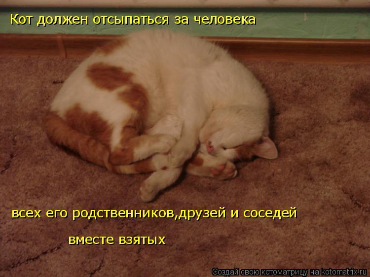 Котоматрица: Кот должен отсыпаться за человека всех его родственников,друзей и соседей вместе взятых