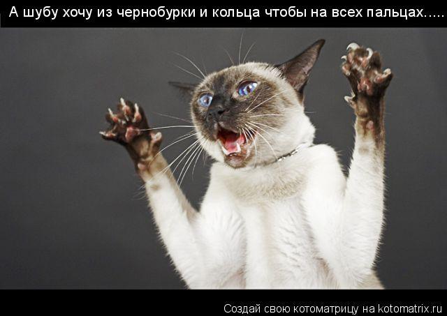 Котоматрица: А шубу хочу из чернобурки и кольца чтобы на всех пальцах.....