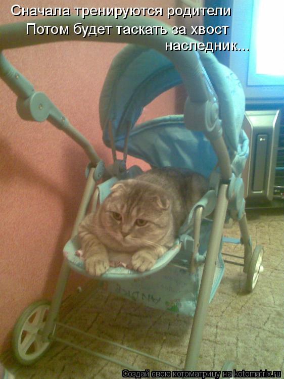 Котоматрица: Сначала тренируются родители Потом будет таскать за хвост наследник...