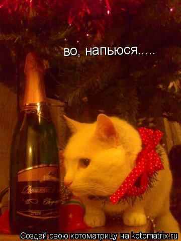Котоматрица: во, напьюся.....