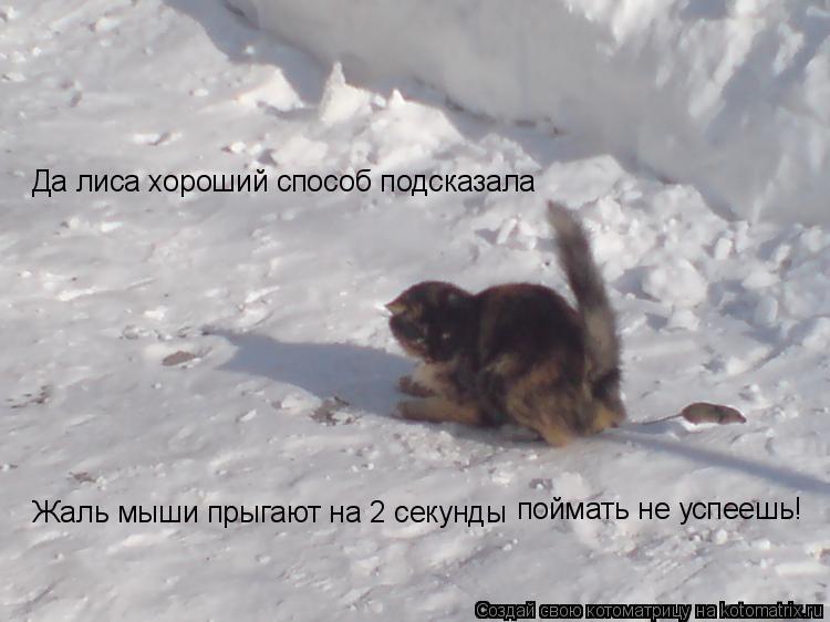 Котоматрица: Да лиса хороший способ подсказала Жаль мыши прыгают на 2 секунды поймать не успеешь!