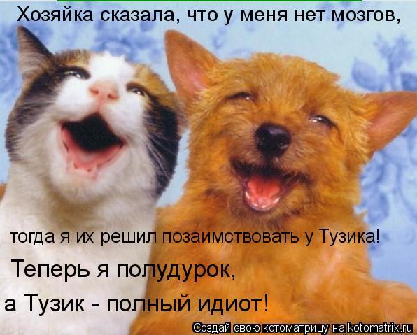 Котоматрица: Хозяйка сказала, что у меня нет мозгов, тогда я их решил позаимствовать у Тузика! Теперь я полудурок, а Тузик - полный идиот!