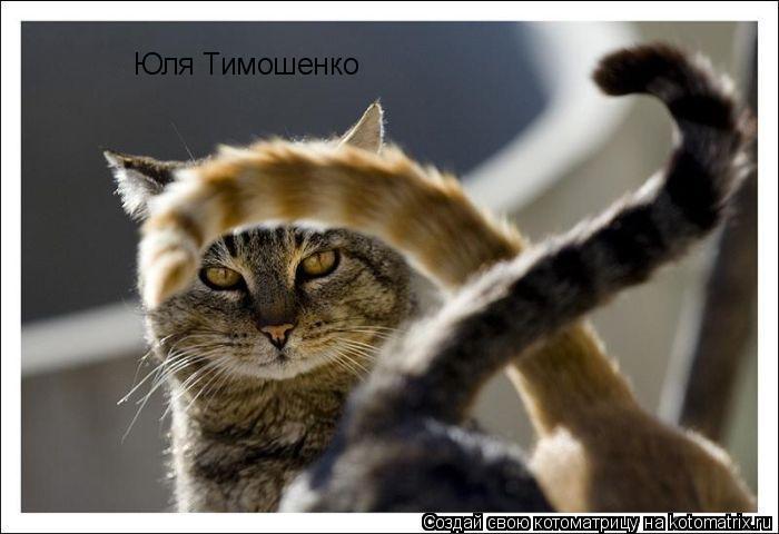 Котоматрица: Юля Тимошенко
