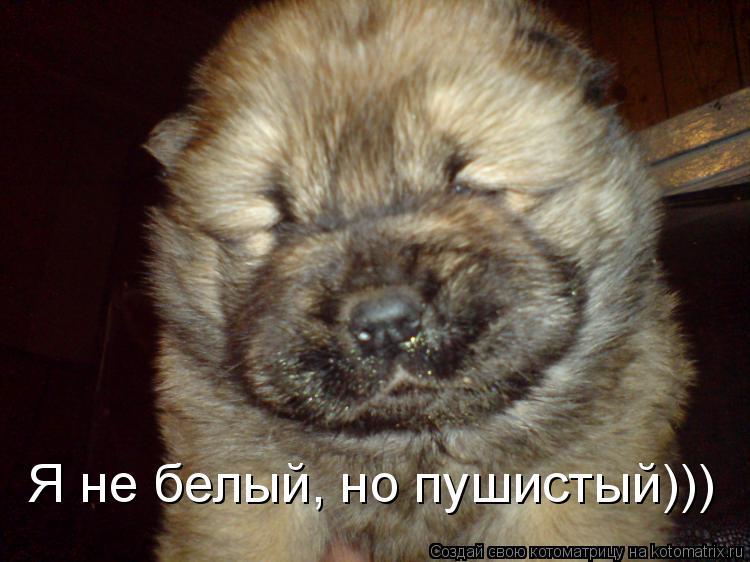 Котоматрица: Я не белый, но пушистый)))