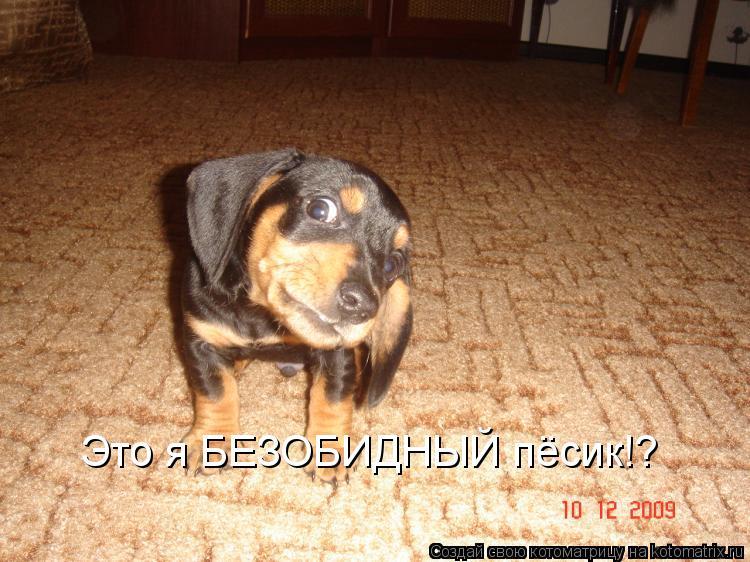 Котоматрица: Это я БЕЗОБИДНЫЙ пёсик!?